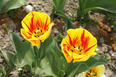 banco de im 193 genes las fotos m 225 s hermosas de rosas de imgenes de flores en alta resolucin fotos de orquideas