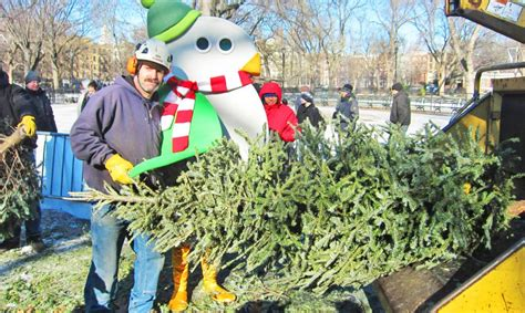recycle your christmas tree at mulchfest 2017 inhabitat