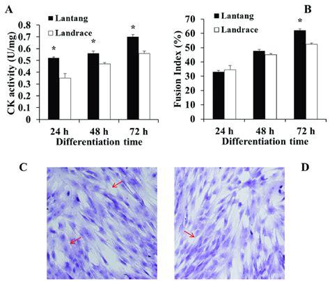 s creatine kinase creatine kinase ck activity a and fusion index b of