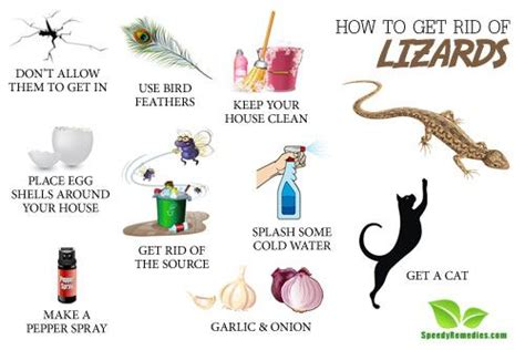how to get a house how to get rid of lizards home remedies by speedyremedies
