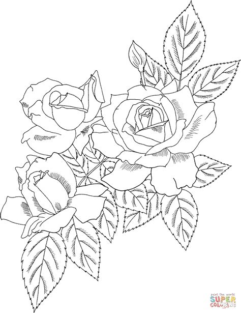 Rose Bush Coloring Page | detailed rose coloring pages coloring pages