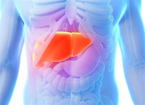 fegato e mal di testa l importanza della salute fegato il punto di vista