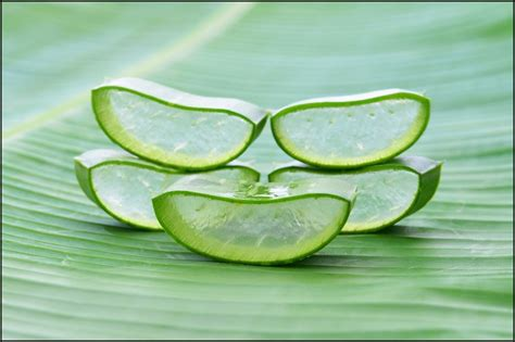 Aloe Vera Facts 10 Vital Health Benefits Of Aloe Vera Plant Reasons Why