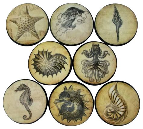 sea life cabinet knobs vintage sea life cabinet knobs 8 piece set view in