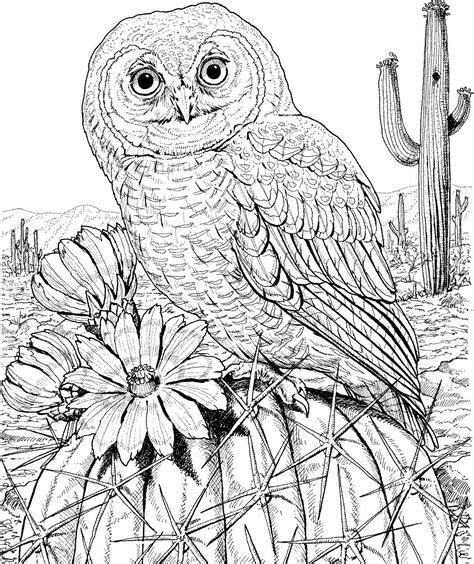 hard coloring pages of owls 10 difficult owl coloring page for adults http