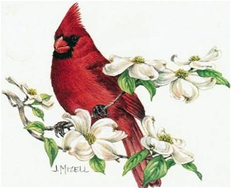 cardinal bird clip art 77