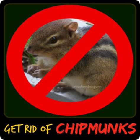 How To Keep Chipmunks Out Of The Garden by Get Rid Of Chipmunks Archives Farm Living
