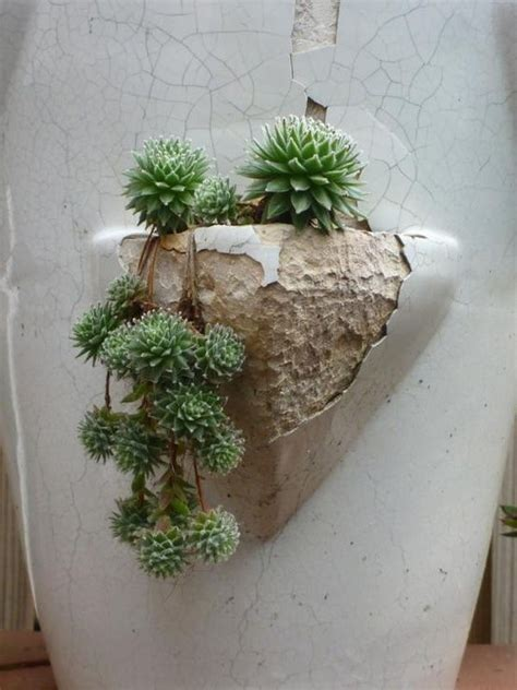 Cactus Wall Planter by Succulents Cactus And Succulent Wall Planter On