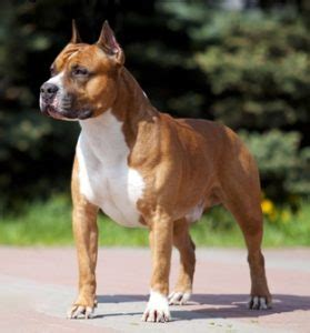 easy going breeds 20 most expensive breeds from around the world
