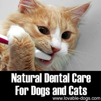 dental care for dogs lovable dogs dental care for dogs and cats lovable dogs