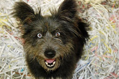 creepy dogs image creepy jpg creepypasta wiki wikia
