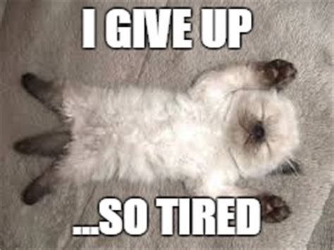 I Give Up Meme - image tagged in so tired tired tired cat give up giving up