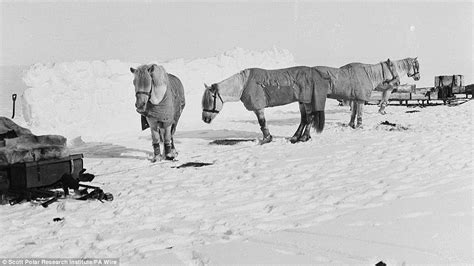 the south pole ponies captain 191 s last pictures of harsh antarctic revealed