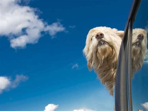 best cars for dogs the 10 best cars for dogs at glance a list of the 10 best cars for dogs might seem