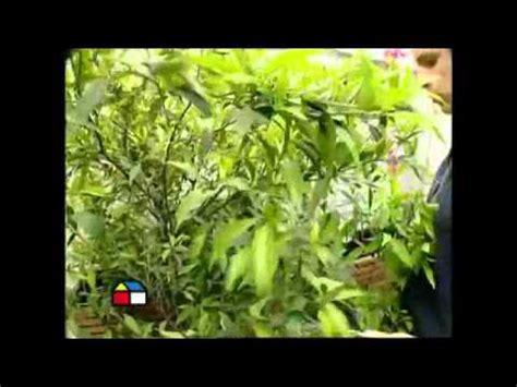 como decorar con plantas una terraza como decorar tu terraza con plantas youtube