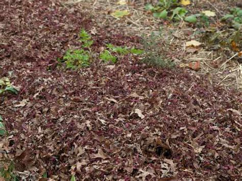 should i use wood chips for vegetable garden mulch landscaping backyards ideas