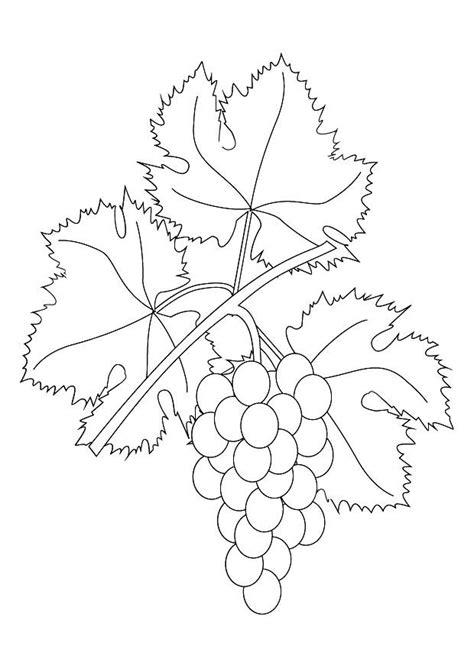 imagenes de uvas en dibujo dibujo para colorear parra con uvas img 9876