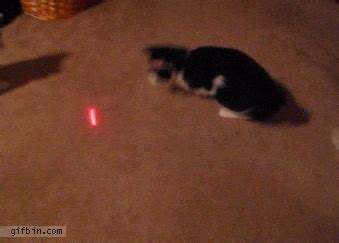 laser light for cats cat vs laser pointer best gifs updated daily