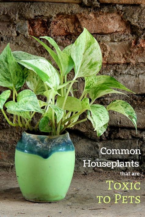 playing  houseplants  indoor garden therapy