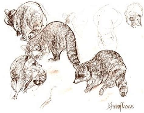 J Sharkey Sketches by Raccoons Painting By J Sharkey