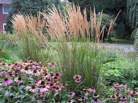 Winterharte Pflanzen Für Terrasse 843 reitgras calamagrostis acutiflora karl f 246 rster ziergras