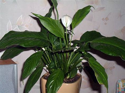 best houseplants best air filtering houseplants according to nasa mnn