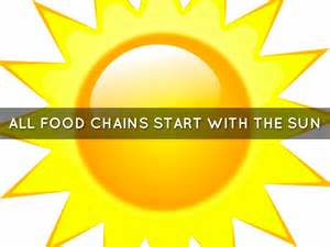 the sun food food chains start with what best chain 2018