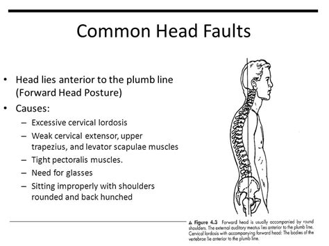 Plumb Line Assessment by Postural Assessment Ppt