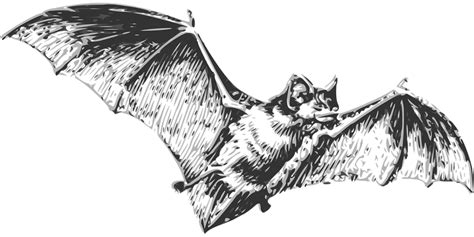 bat tattoo png free vector graphic bat flying wings halloween fear