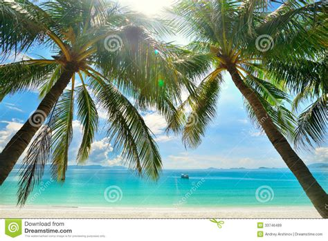 overdue in paradise the library history of palm county books palm trees hanging a white royalty free