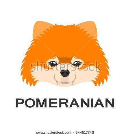flat pomeranian pomeranian puppy stock images royalty free images vectors