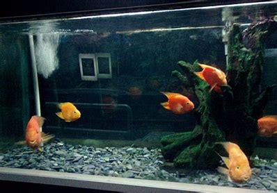 Lu Akuarium Warna Warni ke akuarium dunia air tawar tmii so which blessings