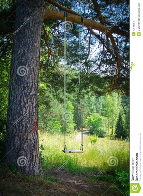 forest swing swinging empty children s swing in forest stock photo