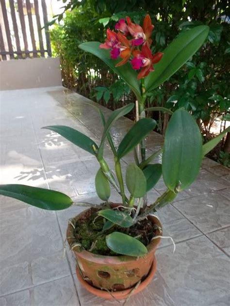 marvelous Small Living Room Decorating Ideas #2: orchids-flowering-plants-garden-design-ideas-19.jpg