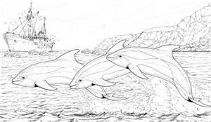 delfine in aktion ausmalbild amp malvorlage tiere