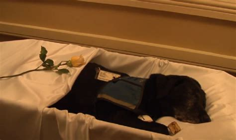 Pet Funeral Home by They Made A Funeral For Tara The In Honor Of Service It S Heartwarming Petsfans