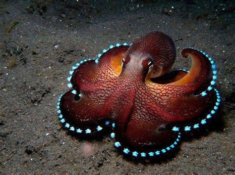 colorful octopus colorful octopus animals beautiful