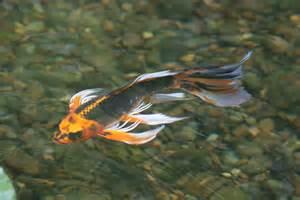 aquascape your landscape pleasures of pond fish
