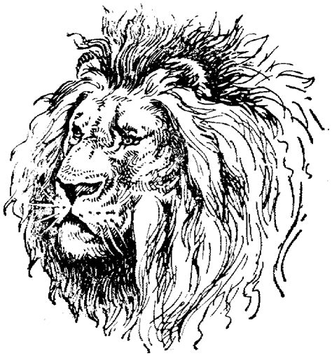 lion side head coloring pages