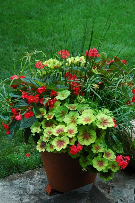 Flowers For Garden Pots 25 Best Ideas About Container Plants On Container Flowers Outdoor Potted Plants