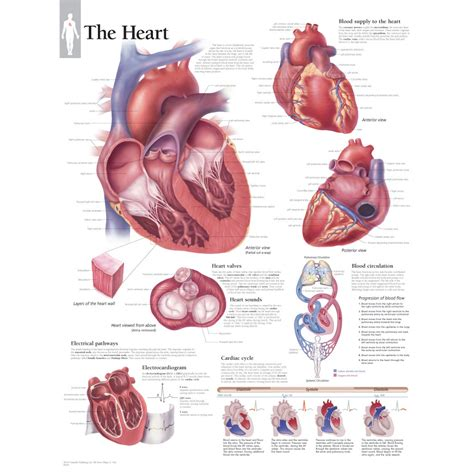hearts and sharts the best 28 images of hearts and sharts file diagram