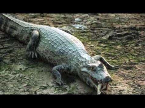imagenes de animales nativos del peru los animales de per 250 youtube