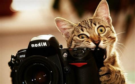 cat jokes wallpaper cat wallpapers page 29 hd wallpapers images pictures