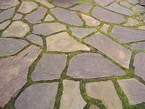 how to seed flagstone walkway with moss tomcomknowshow