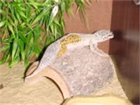 Do Geckos Shed by Leopard Gecko Care Sheet