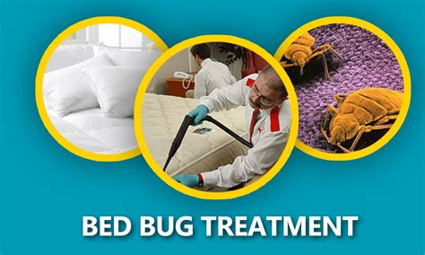 bed bug prevention brooklyn rug clean 20 off all cleaning services brooklyn