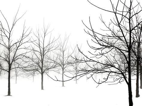 Tree Duvet Cover Winter Black Walnut Trees No 2 Photograph By Angie Rea