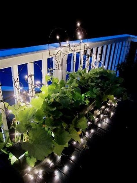 illuminate  urban vegetable garden  home depot
