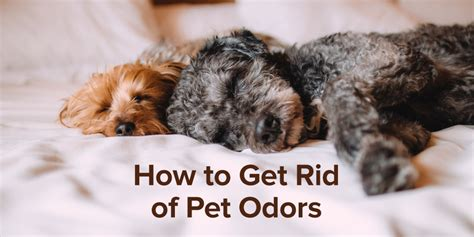 how to get rid of dog odor in house how to get rid of pet odors