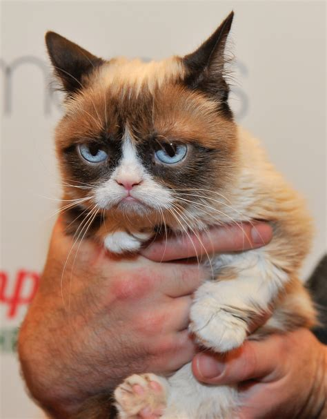 The Cat grumpy cat is now quot writing quot comic books and here are 6